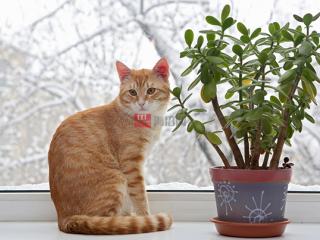 10种对狗和猫有害的家庭植物