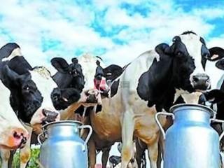 中国新电子商务法出台 澳洲奶粉股承压