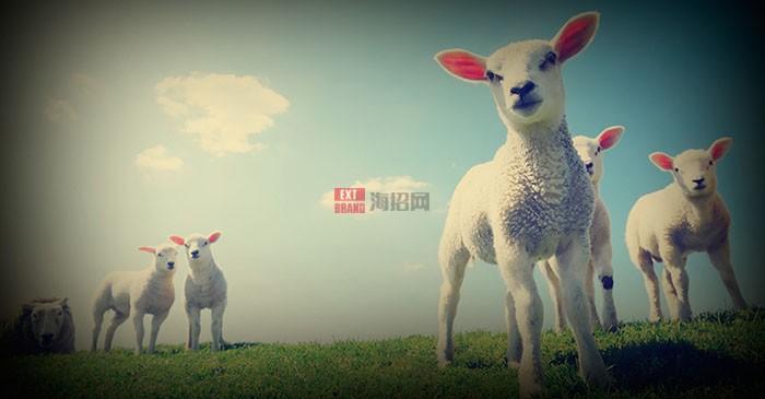 lambs-bg