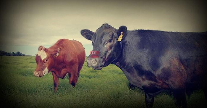 澳大利亚牛肉