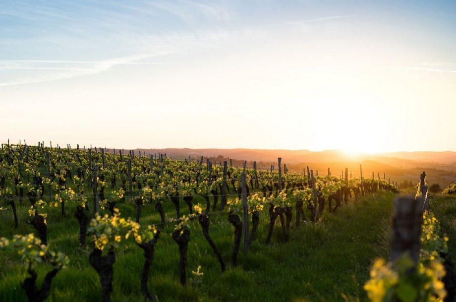 法国葡萄酒集团和医护人员之间的口水战愈演愈烈