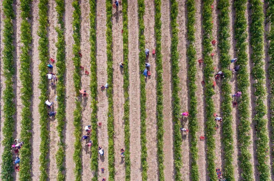 ethical wine