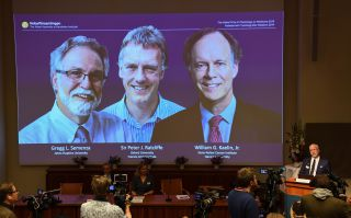 Nobel Assembly member, Randall Johnson, speaks during the announcement of this year's winners of the Nobel Prize in Physiology or Medicine, at the Karolinska Institute in Sweden: (from left to right on the screen) Gregg Semenza, Peter Ratcliffe and William Kaelin.