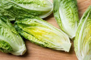 romaine, lettuce