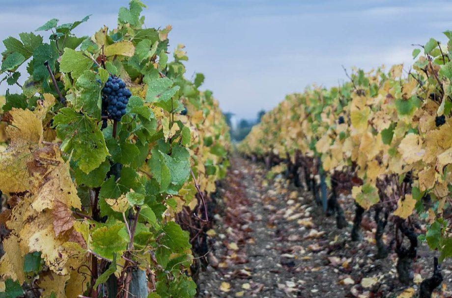 2019年全球葡萄酒产量将下降10%