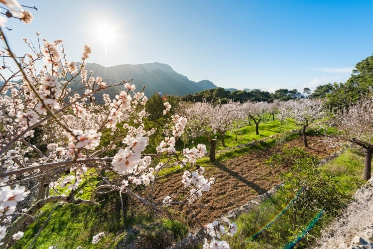With the food system relying on declining pollinator populations, Edete says a technological solution will be needed ?GettyImages-Sebastian Adrover Camps
