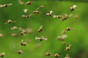 GettyImages-Andreas Hauslbetz-Bees