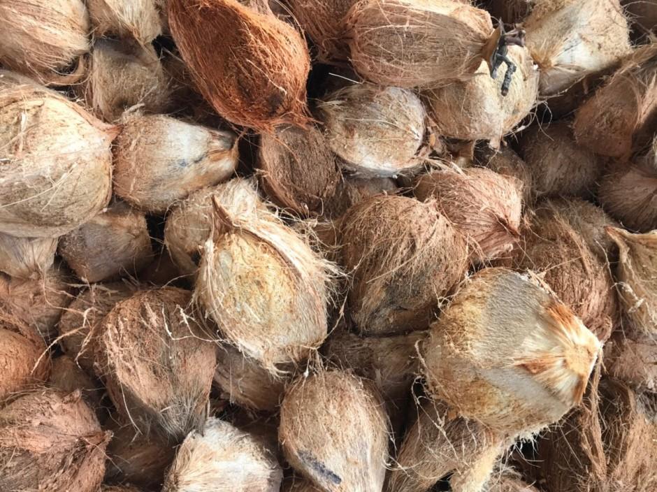 越南带皮老椰子带壳老椰子结婚庆喜宴