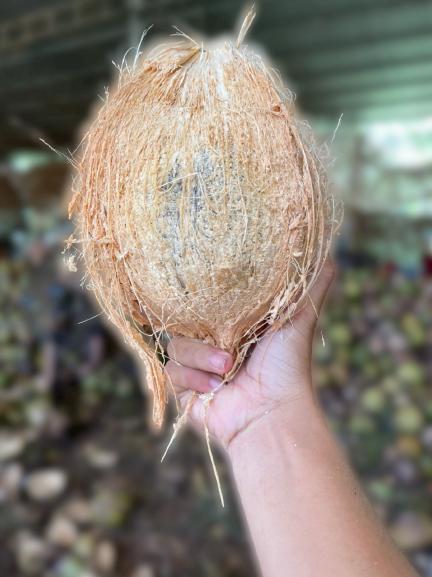 越南老椰子