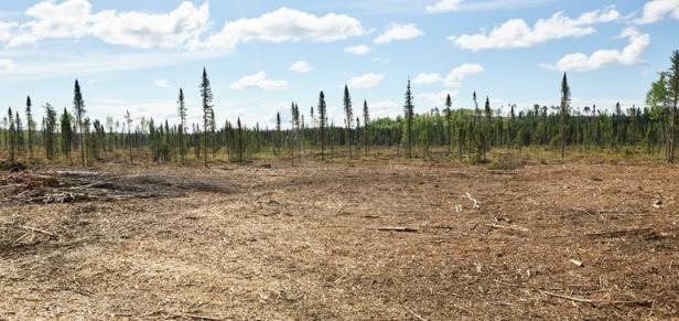 ADM承诺到2030年将森林砍伐从其供应链中移除