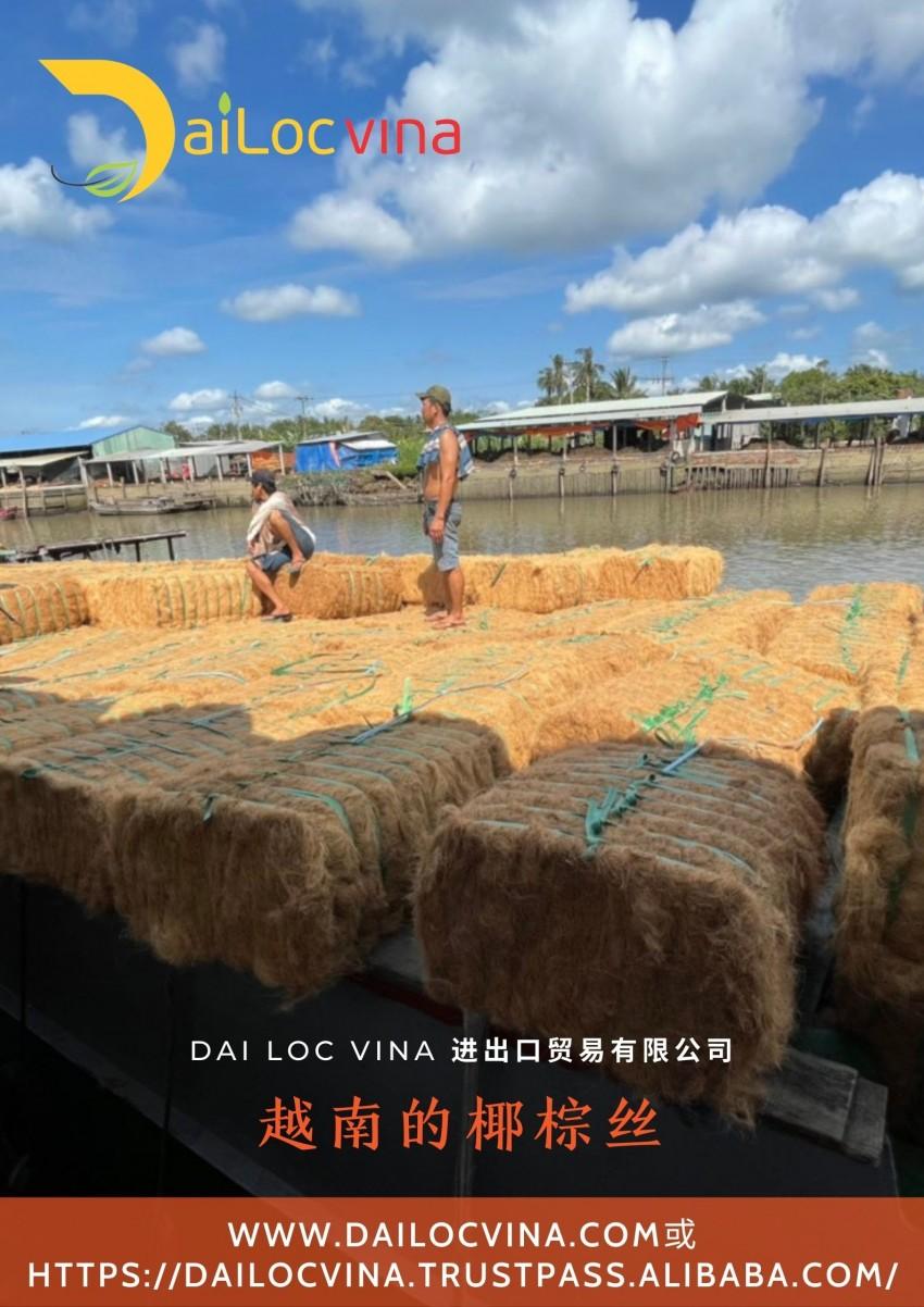 DAI-LOC-VINA-越-南-椰-棕-椰-棕-丝 (7)