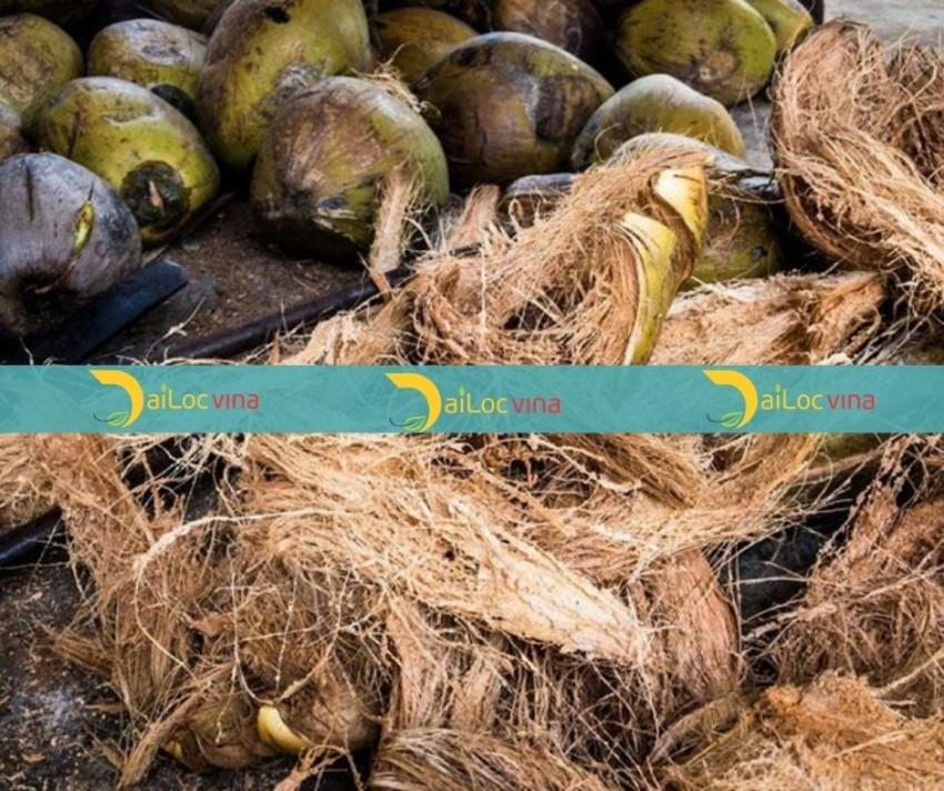 越南的椰丝 (4)