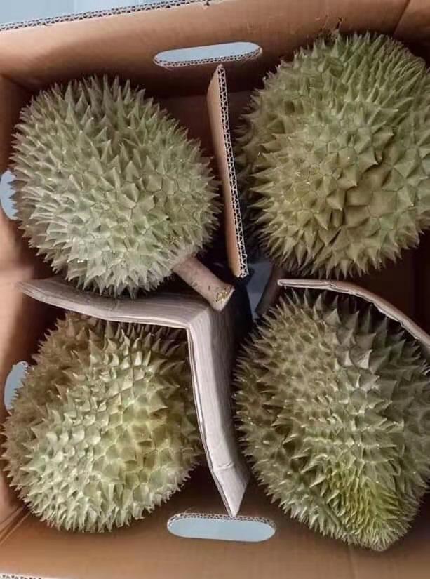 泰国原产进口榴莲