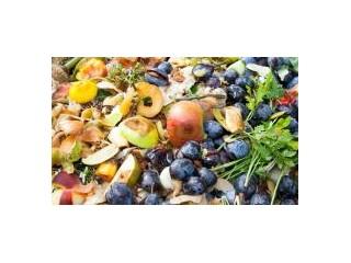 食物浪费:消化对气候的影响-新食物杂志